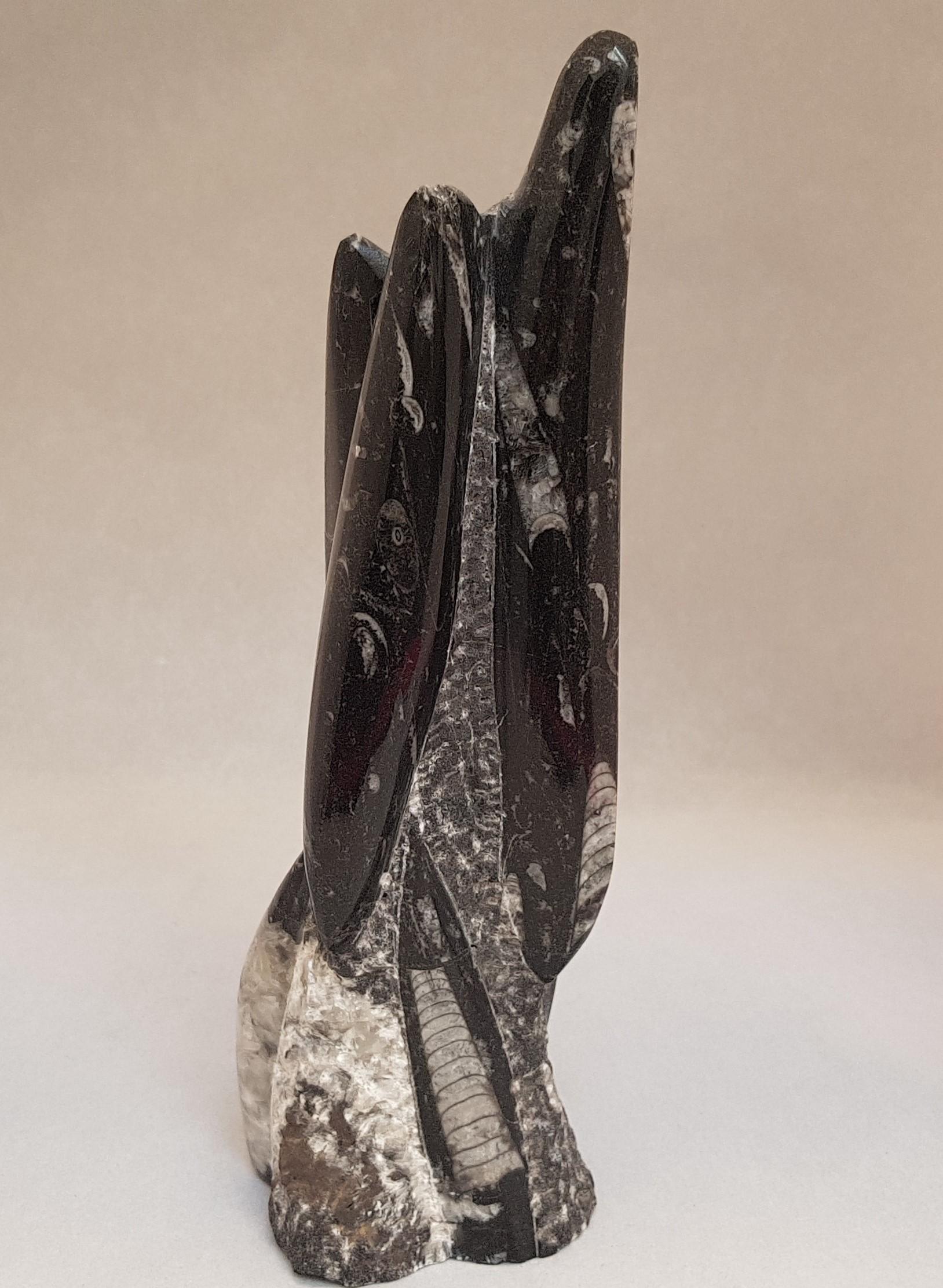Orthoceras of fossiele inktvis